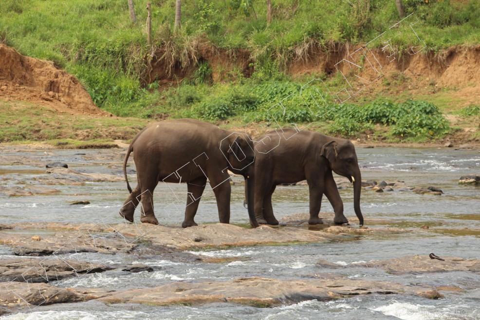 Detail - Sri Lanka 2015 – Pinawala, sloni vřece